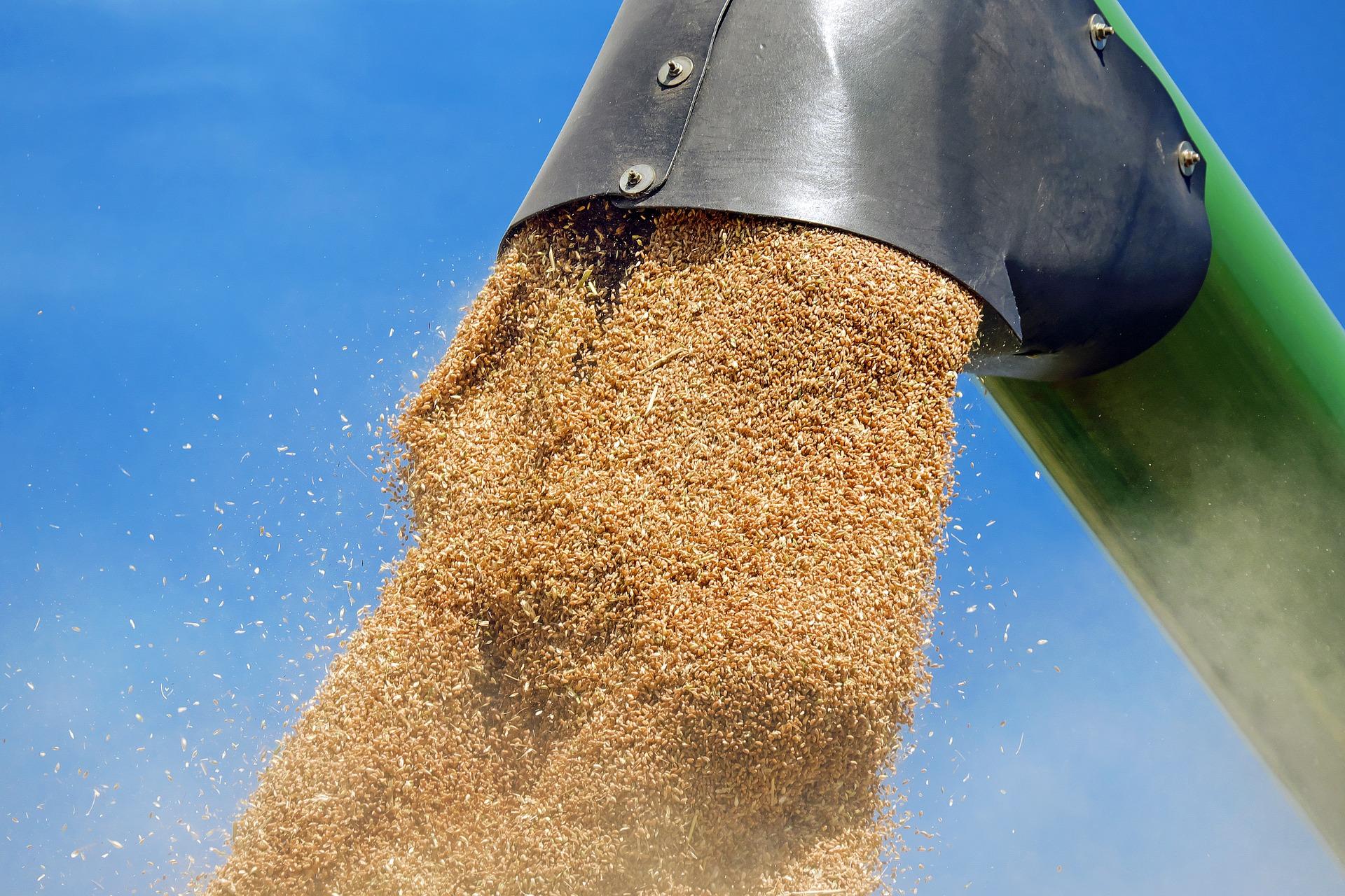 Терминал для погрузки зерна хотят построить в Нижегородской области  - фото 1