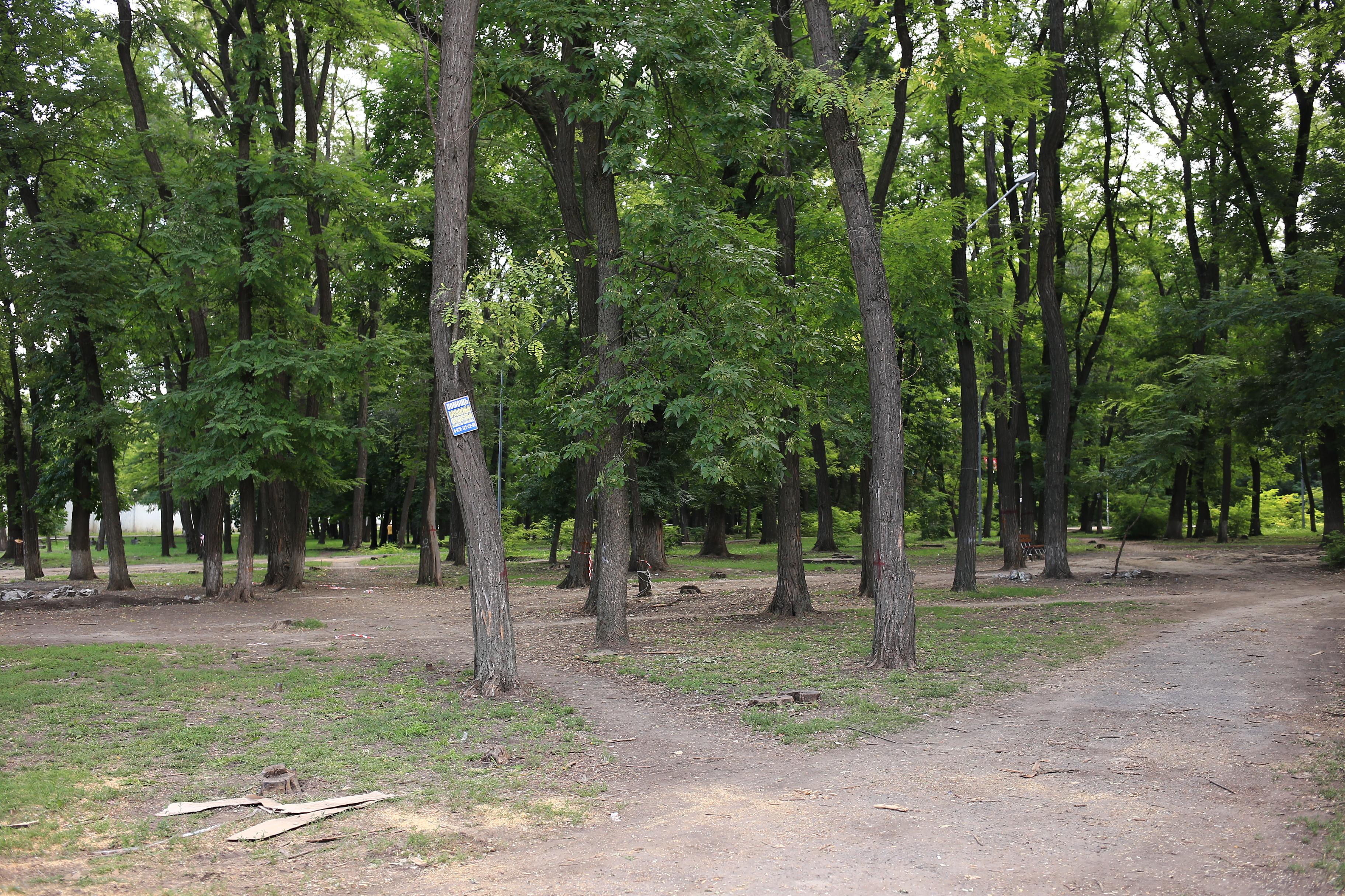При реконструкции парка «Осенний» в Ростове сохранят все здоровые деревья